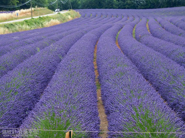 Rousillon, France 紅土之城 附近的薰衣草