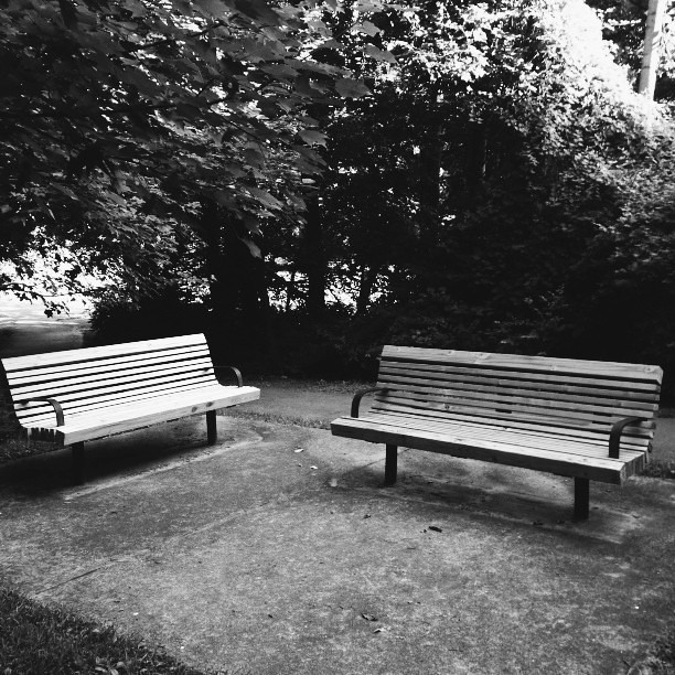 Park benches in a park. #vscocam