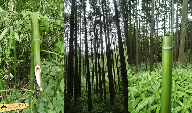Hiking Mt. Nabewari - day trip from Tokyo