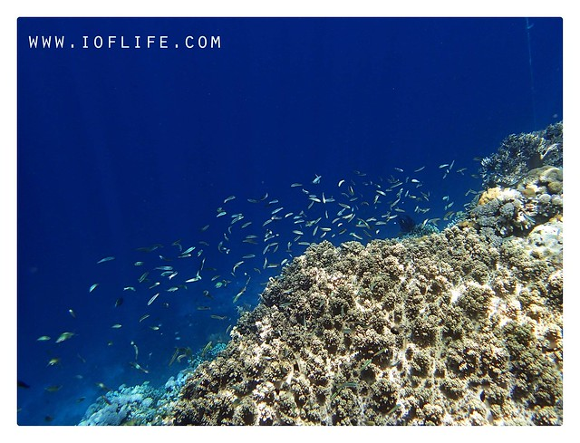 ikan-ikan dan karang pulau kambing