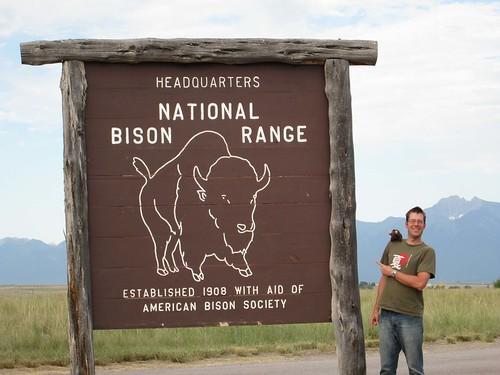 5247af447a108-buddy bison range
