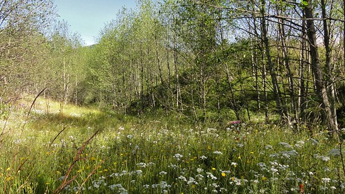 Lovely meadow scenes along the Hummocks Trail.