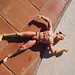Small photo of Action man sunbathing
