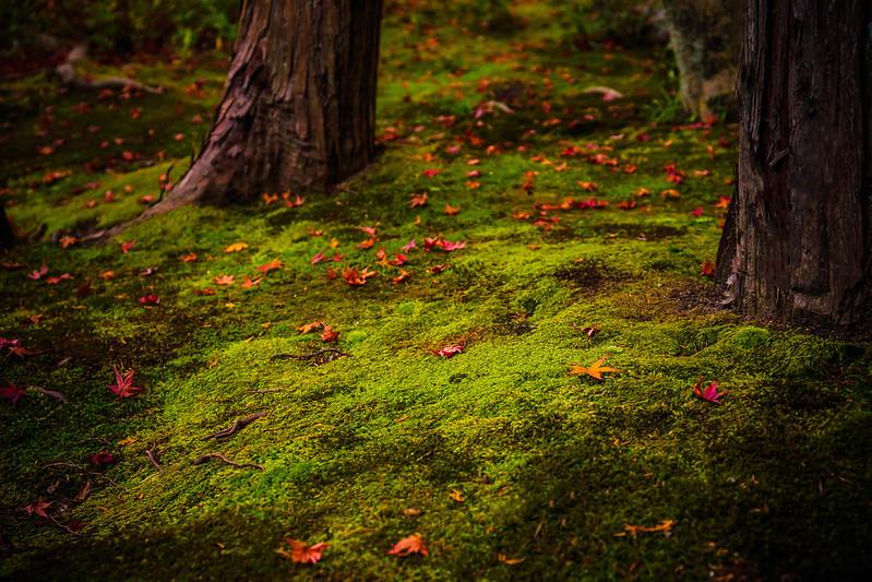 Autumnal tint