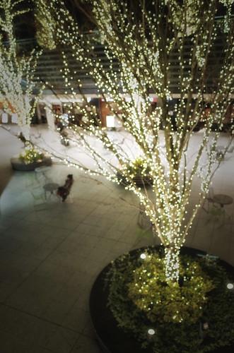 2013.12.22(R0014257-2LR_GR_Sunlight