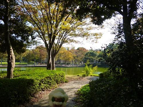 Whimsicott in Tsukuba, Ibaraki 1 (Tsukuba central park)