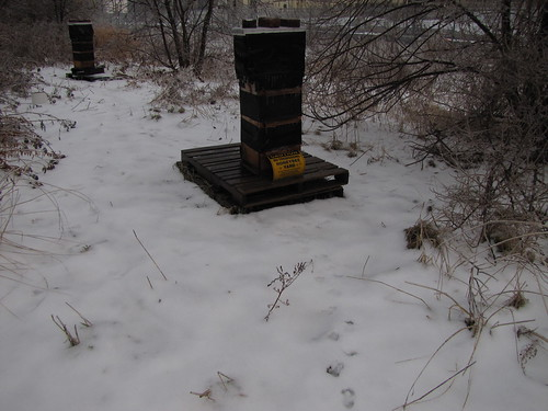 hives after the ice storm
