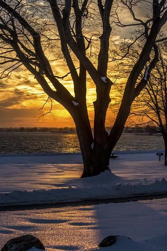 park travel sunset snow cold tree river frozen travels traveling sherwoodisland travelphotography
