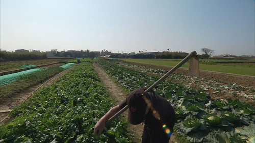 農業為主的海口村也在徵收範圍中。