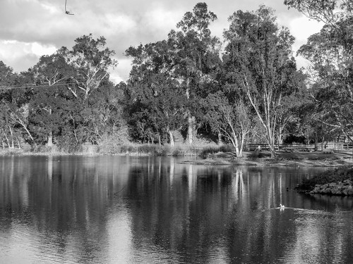 ca trees blue california monochrome vasonalakecountypark water losgatos outdoor lake green bw blackandwhite park clouds unitedstates us