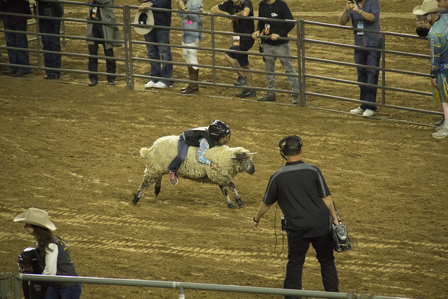 Rodeo and Concert2_132