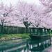 sakura by SHIANG CHANG LA.LA