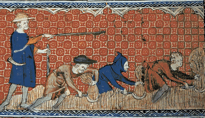 Peasants harvesting wheat with reaping-hooks, from Queen Mary Psalter