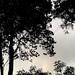 Una tarde en el Parque Nacional av. 1-3, c. 15-19/ An afternoon at the