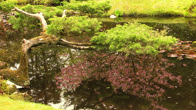 Blossom reflected, Canon POWERSHOT S5 IS