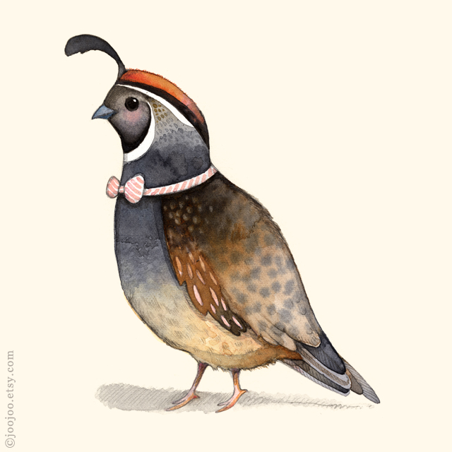 Quail watercolor painting