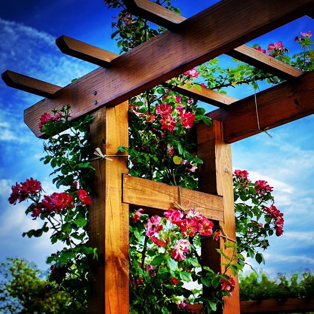 Allentown Rose Garden Lehighvalley Iglehighvalley Iglv