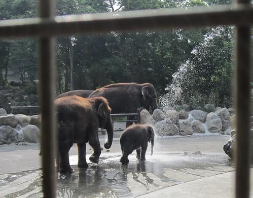 アジアゾウの親子 by Poran111