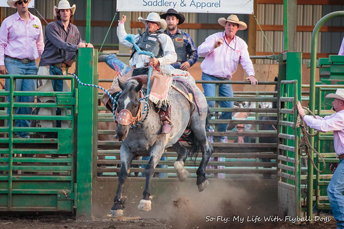 Benton County Fair and Rodeo 2013-6934