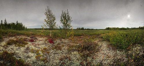 wild panorama nature ecology zeiss forest landscape outdoors woods north northern russian tundra distagon sekonic carlzzeiss distagont2821 hyperfocalfocusing xritecolorcheckerpassport czdistagon lee6ndgsoftfilter czdistagoncom