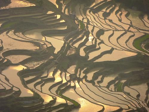 Yunnan13-Yuanyang 24-Bada (45)