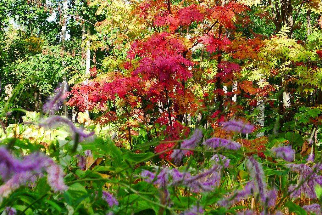 Kumpula Botanic Gardens