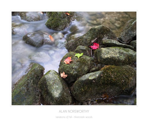 Silvercreek woods - Variations of Fall by Alan Norsworthy