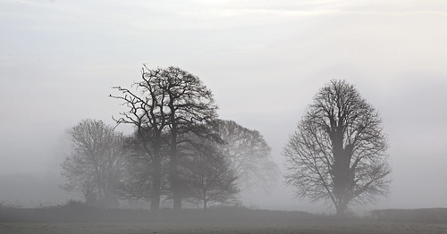 Mist on the Levels