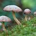 Meet the mushrooms by Canon Queen Rocks (2,484,000 + views)