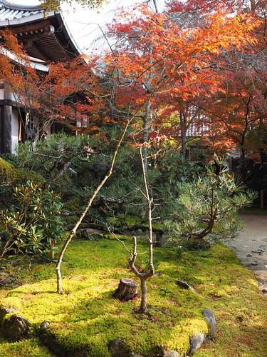 西明寺 苔と紅葉