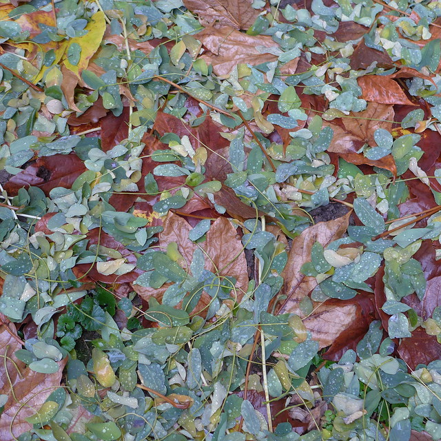 leafy covering