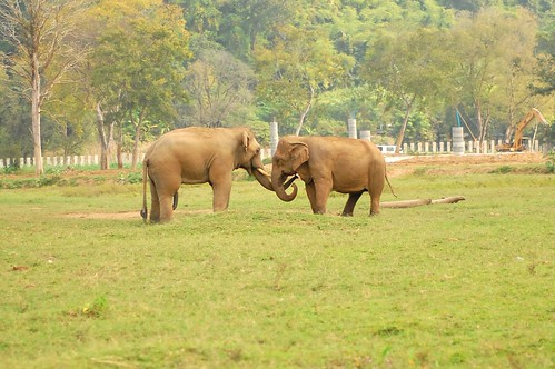Elephant Nature Park 5