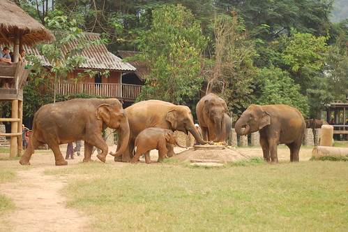 Elephant Nature Park 10