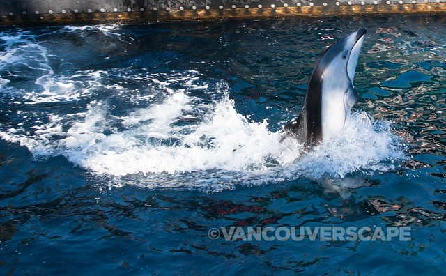 Vancouver Aquarium Up Close-1