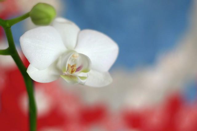 orquídea_8_20140119 - Version 2