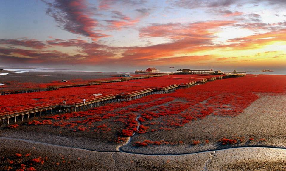 panjin_red_beach_landscape_wallpaper-other