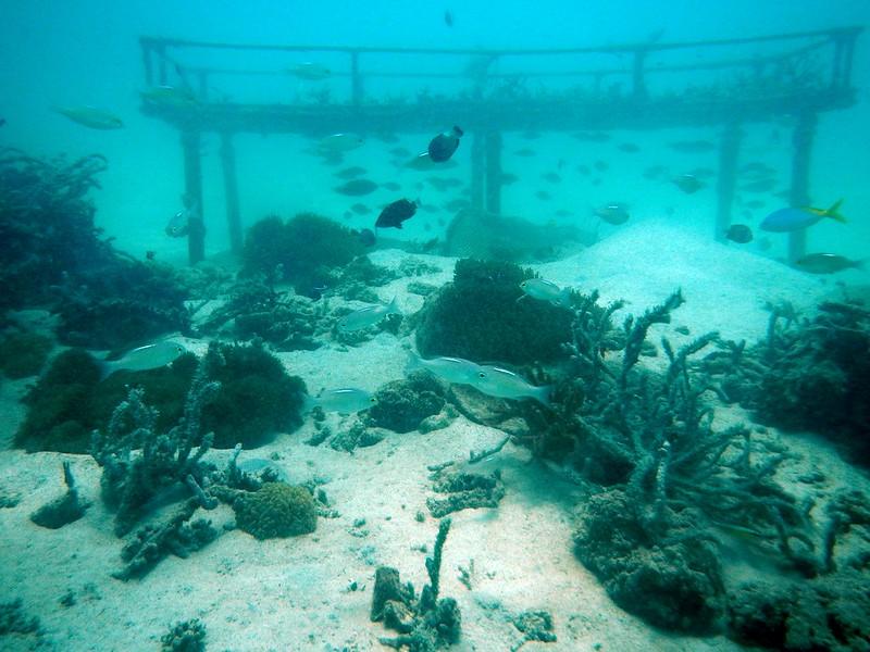13718813103 9c710db6a5 c PADI Discover Scuba Diving Di Pulau Mamutik, Sabah