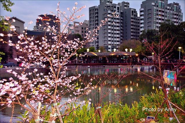 麗池櫻花74