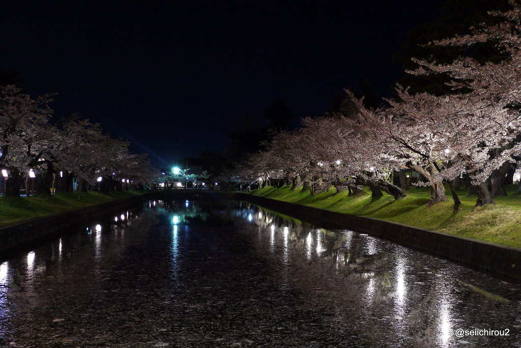鶴岡公園夜桜