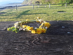 Abandoned crown, flowers, dandelions, miniature daisys, weatherrd wood table, sunny day, Saltwater State Park, Des Moines, Washington, USA