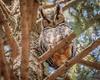 Owl4a