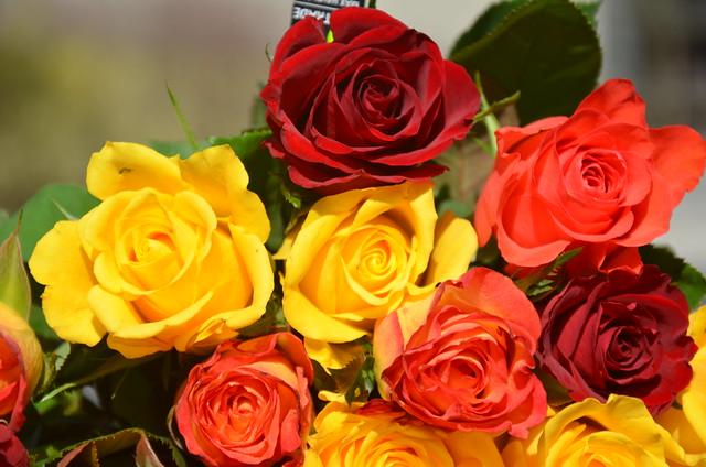 Vente roses équitables