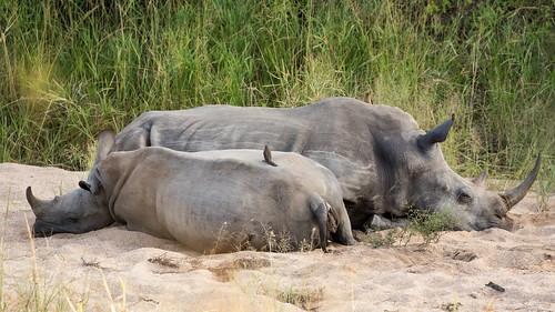 krugerpark mpumalanga southafrica