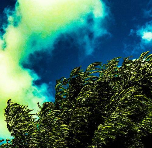 Paisagens... #meuolharemfotos #ednelsonfotografia #edjss #abstract #abstrato #foto #photo #fotografia #landscapephotography #landscape #paisagem #photography #naturephotography #natureza #nature #maceio #alagoas #meioambiente #enviroment #céu #sky #nuvens