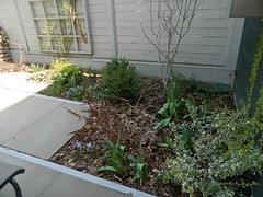 Summerhill Toronto spring backyard garden cleanup before by Paul Jung Gardening Services