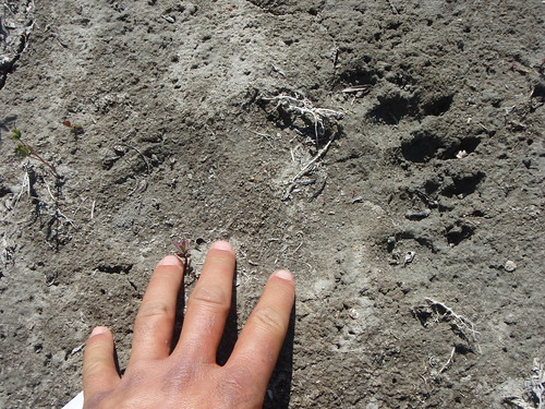 Grizzly print on the hike out