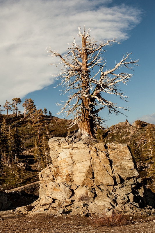 RockyTree_SquawValley__CA_G.LHeureux-0624
