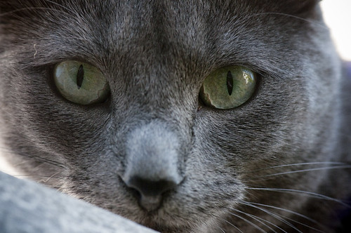 Catseye by petetaylor