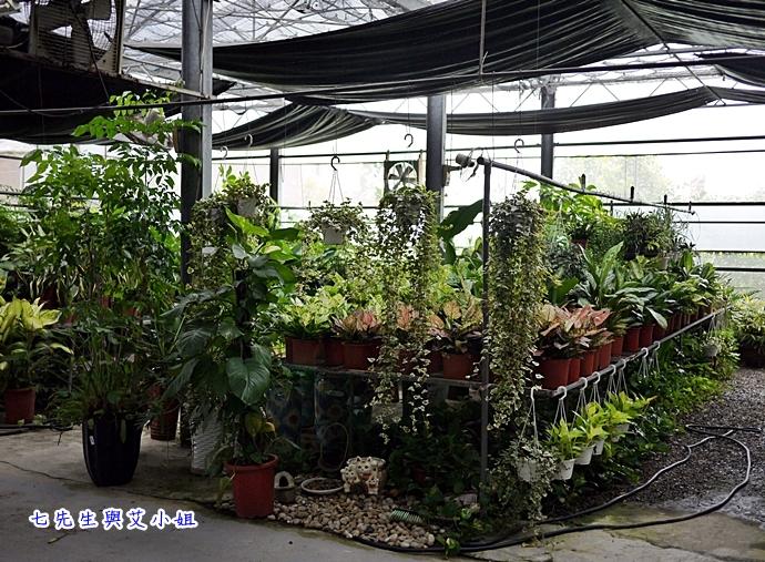 9 金羽庭花卉農場