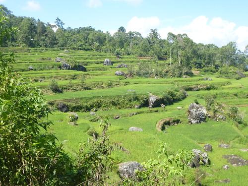 Sulawesi13-Lo'ko Mata-Tikala (1)